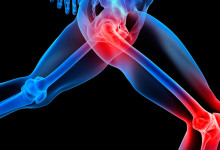 Connective tissue, joints and muscles